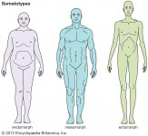 ectomorph-endomorph-somatotypes-body-types.jpg